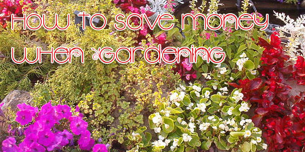 How to Save Money When Gardening