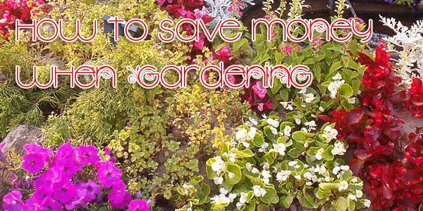 how-to-save-money-when-gardening